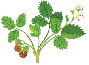 Плодоносные растения