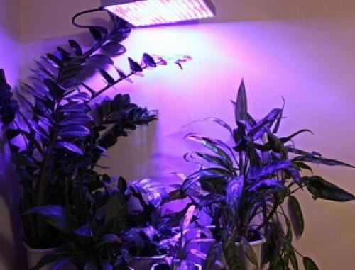 Южные растения - досветка