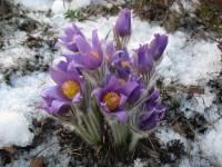 Уральская весна